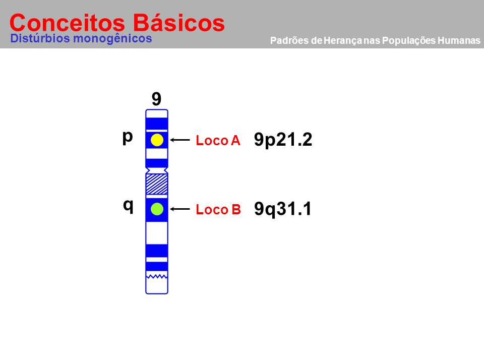 Conceitos Básicos 9 p 9p21.2 q 9q31.1 Loco A Loco B