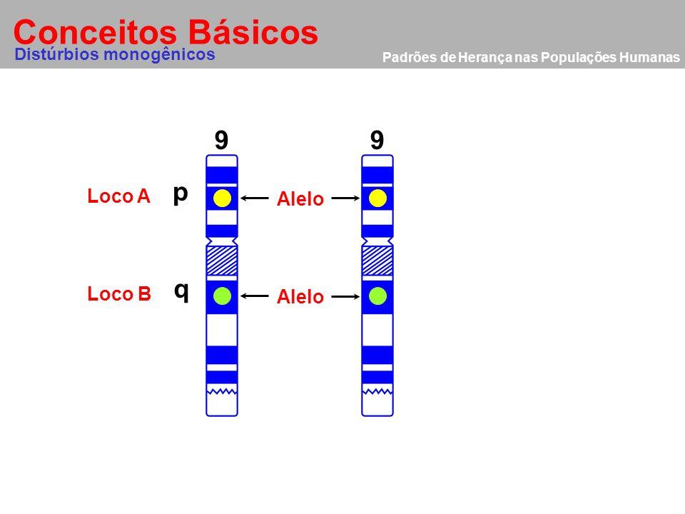 Conceitos Básicos 9 9 p q Loco A Alelo Loco B Alelo