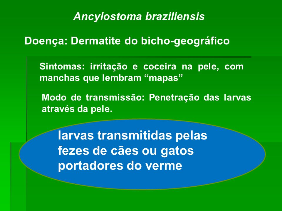 Ancylostoma braziliensis Doença: Dermatite do bicho-geográfico