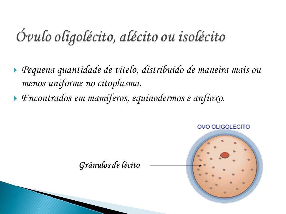 Óvulo oligolécito, alécito ou isolécito