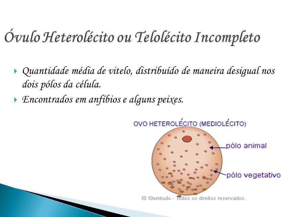 Óvulo Heterolécito ou Telolécito Incompleto