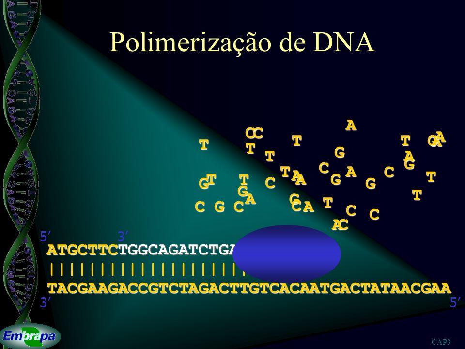 Polimerização de DNA A C C A T T G A T T G T A G C T A C A T T A G T G