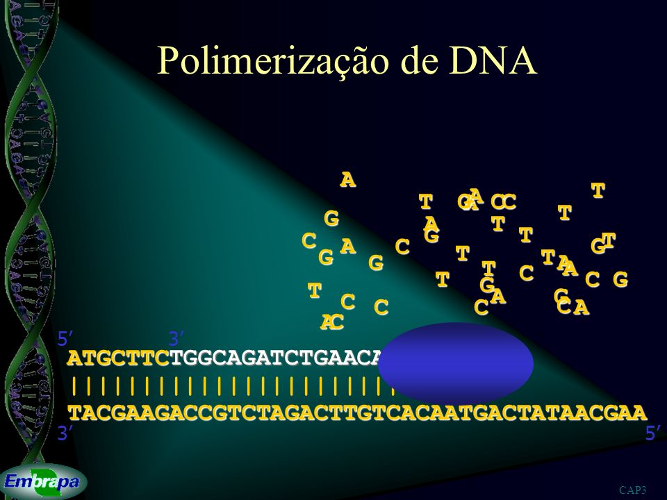 Polimerização de DNA A T A T G A C C T G A T G T C T A C G G T T G A T
