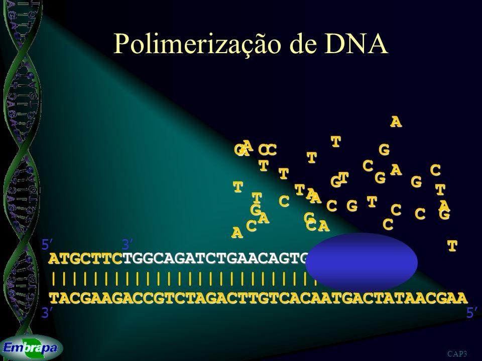 Polimerização de DNA A T A G A C C G T T C A C T T G G G T T T A T A C