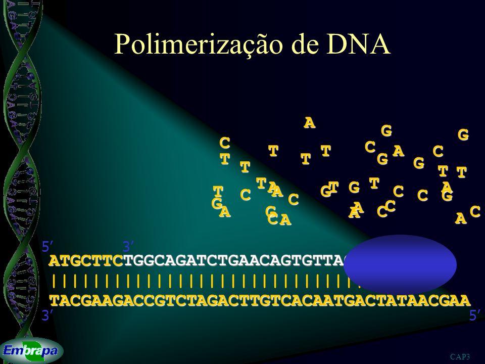 Polimerização de DNA A G G C C T T A C T T G G T T T T T A T G A T A G