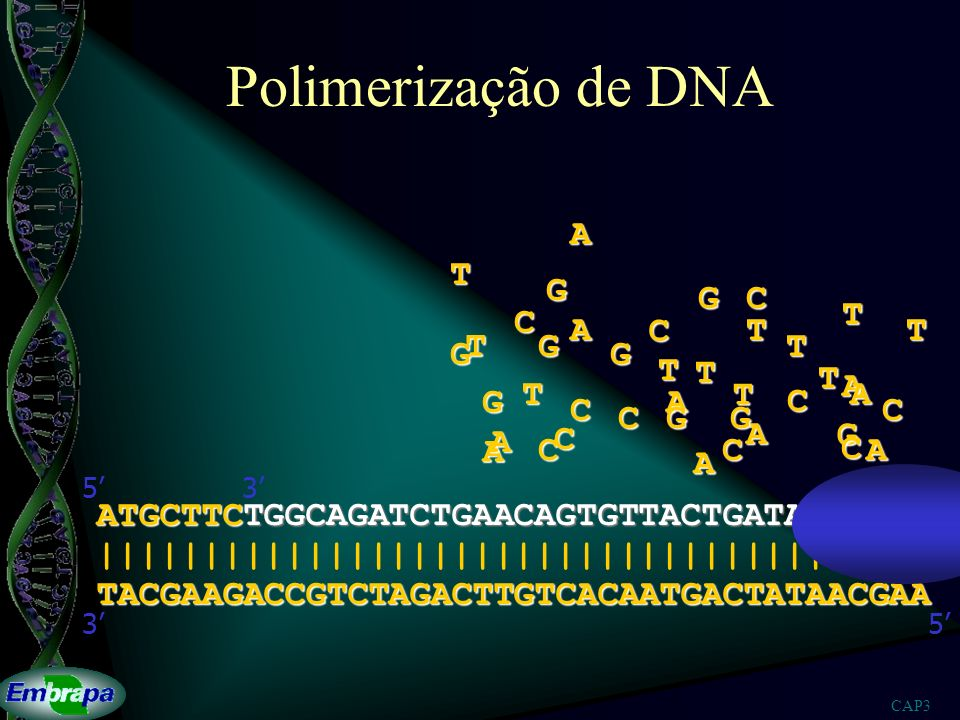 Polimerização de DNA A T G G C T C A C T T T G T G G T T T A T T A G A