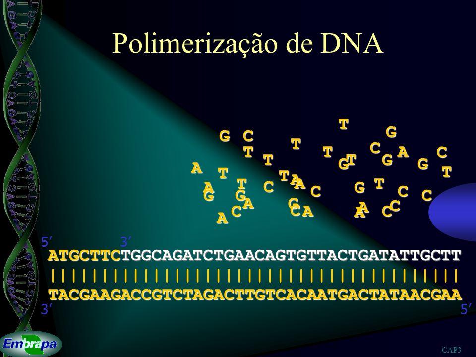 Polimerização de DNA T G G C T C T T A C T T G G G A T T T A T A T A C