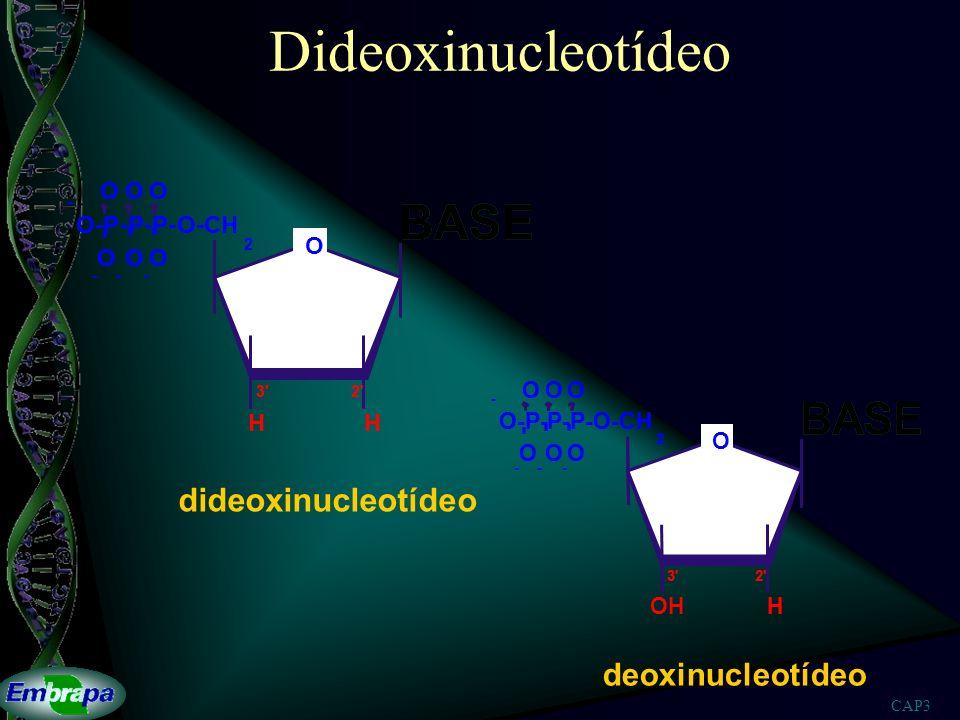 Dideoxinucleotídeo BASE BASE BASE dideoxinucleotídeo deoxinucleotídeo