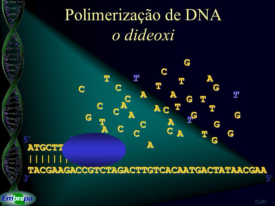 Polimerização de DNA o dideoxi