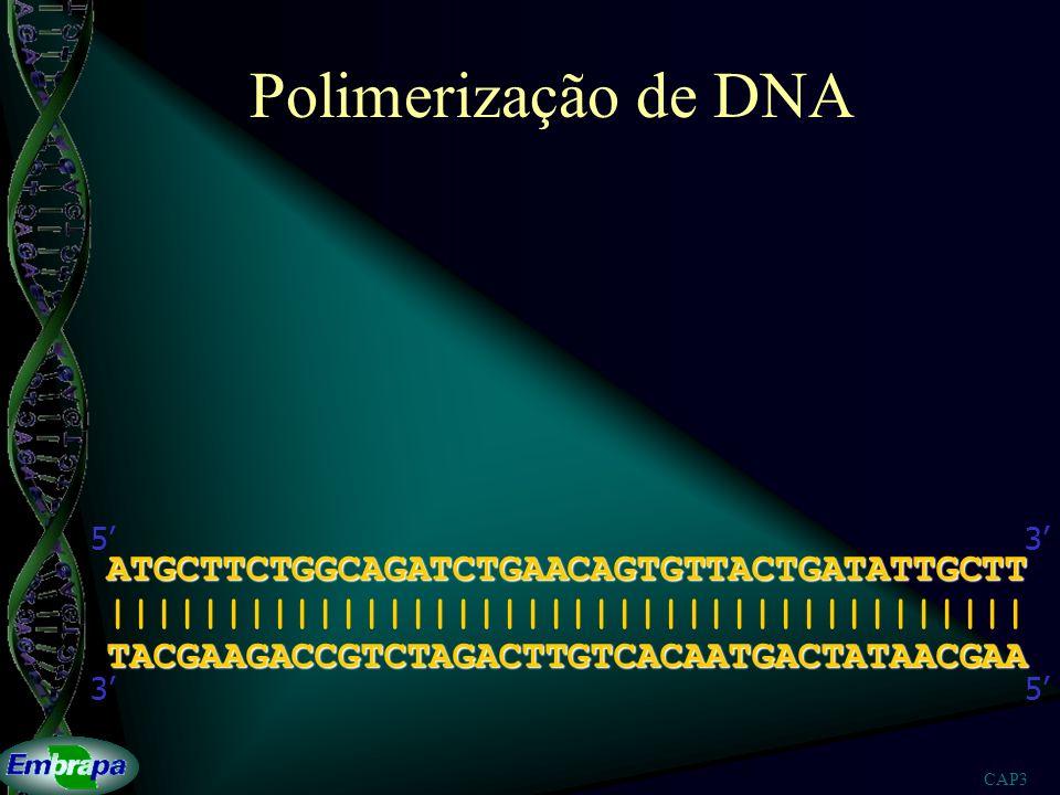 Polimerização de DNA ATGCTTCTGGCAGATCTGAACAGTGTTACTGATATTGCTT