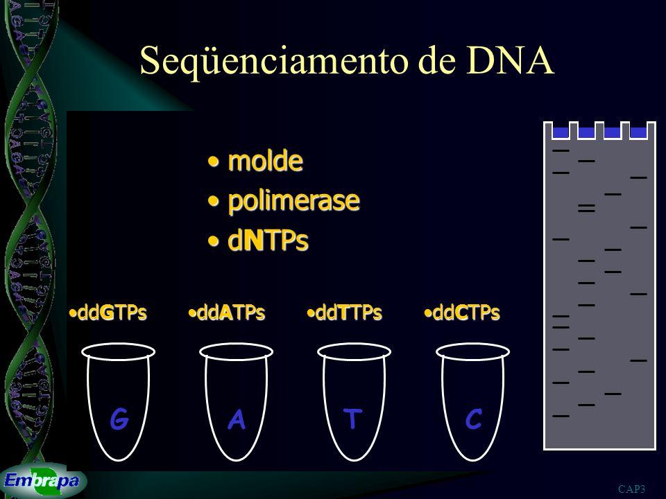 Seqüenciamento de DNA molde polimerase dNTPs G A T C ddGTPs ddATPs