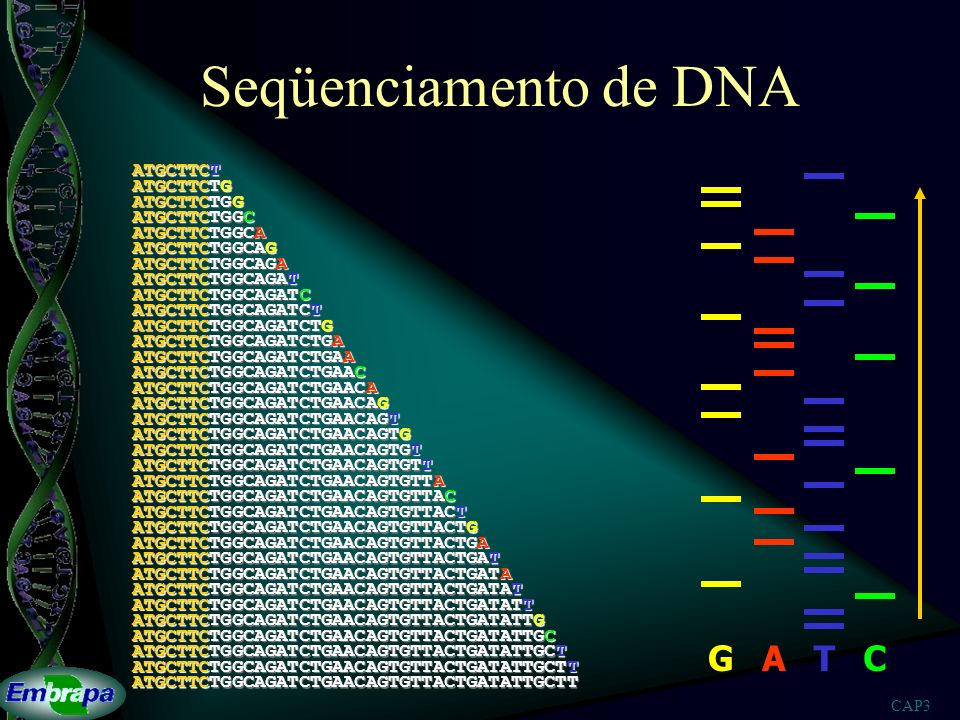 Seqüenciamento de DNA G A T C ATGCTTCT ATGCTTCTG ATGCTTCTGG
