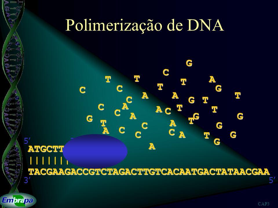 Polimerização de DNA G T A C ATGCTTC |||||||