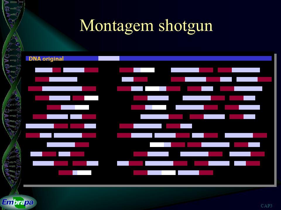 Montagem shotgun DNA original