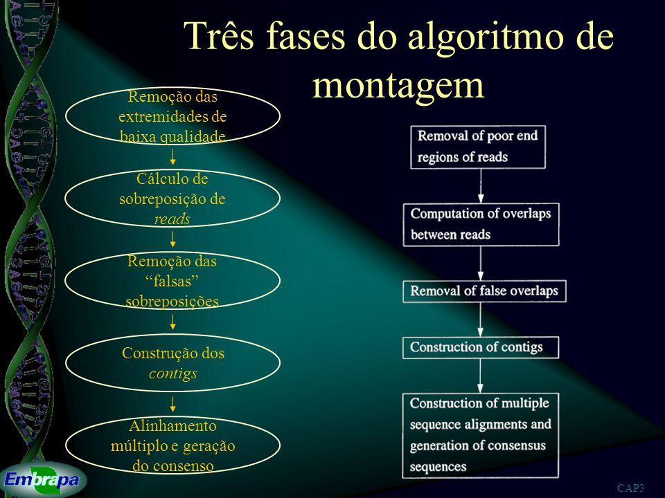 Três fases do algoritmo de montagem