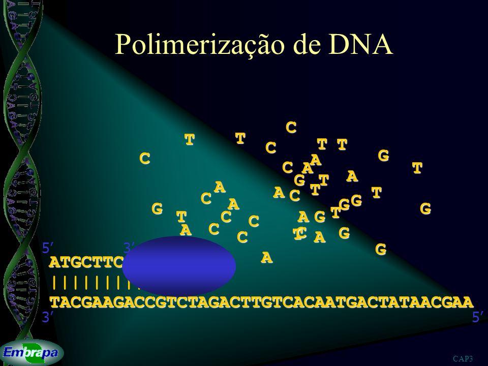 Polimerização de DNA C T T T T C C G A C A T A G T A A T T C C G A G G