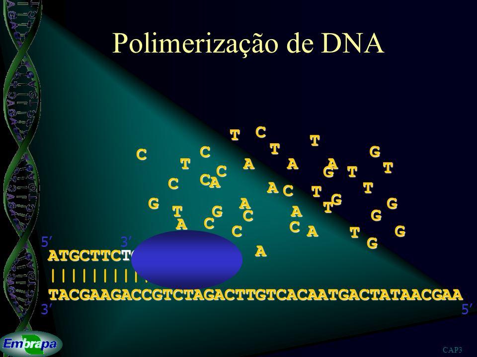 Polimerização de DNA T C T T C C G T A A A T C G T C C A A T C T G G A