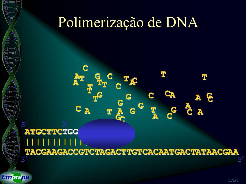 Polimerização de DNA C T A G C T T T C A T A T T C T G C G C A G T A C