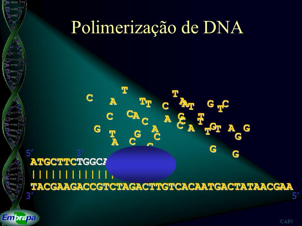 Polimerização de DNA T T C A T A T A G C C T T C C A G T A C C T C A G