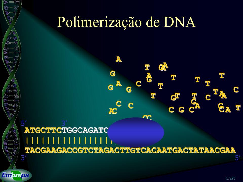 Polimerização de DNA A A T G A G A T T G T A C T G T G C T A T T T A G