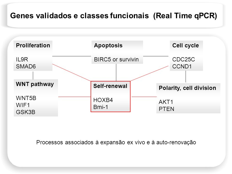 Genes validados e classes funcionais (Real Time qPCR)