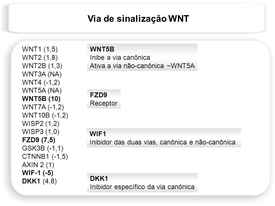 Via de sinalização WNT WNT1 (1,5) WNT2 (1,8) WNT2B (1,3) WNT3A (NA)