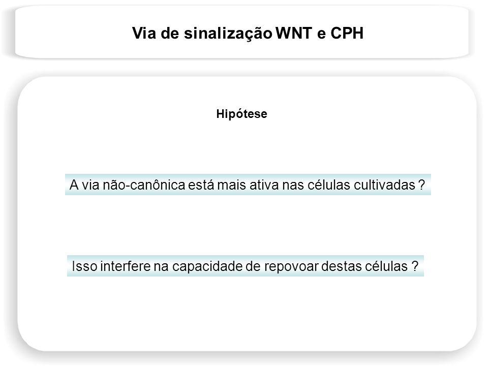 Via de sinalização WNT e CPH