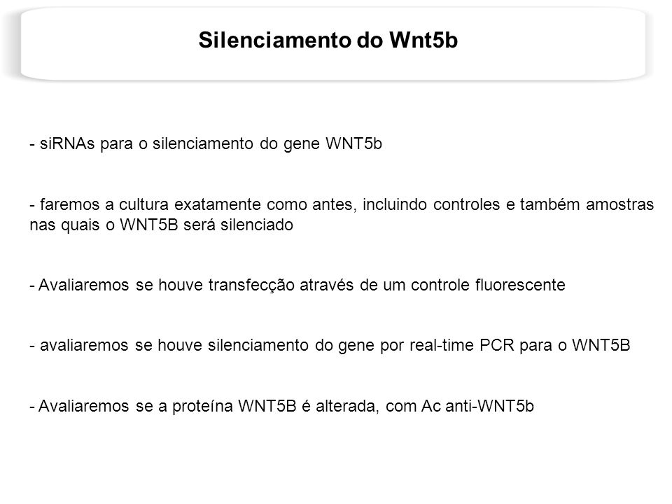 Silenciamento do Wnt5b siRNAs para o silenciamento do gene WNT5b