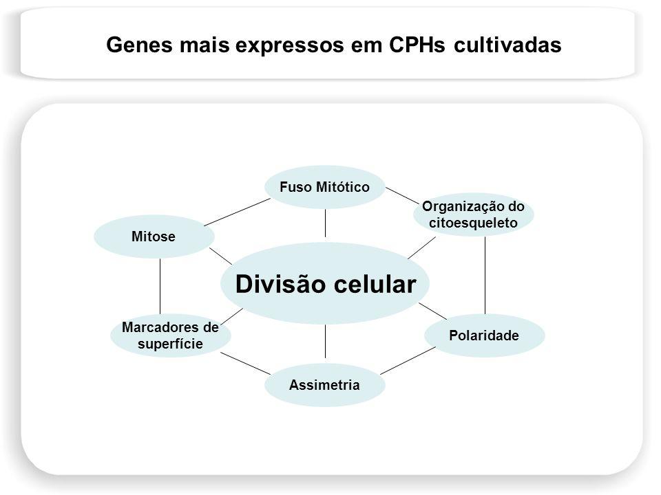 Divisão celular Genes mais expressos em CPHs cultivadas Fuso Mitótico