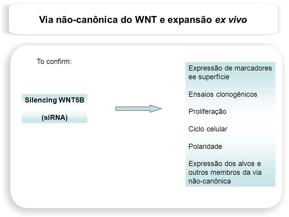 Via não-canônica do WNT e expansão ex vivo