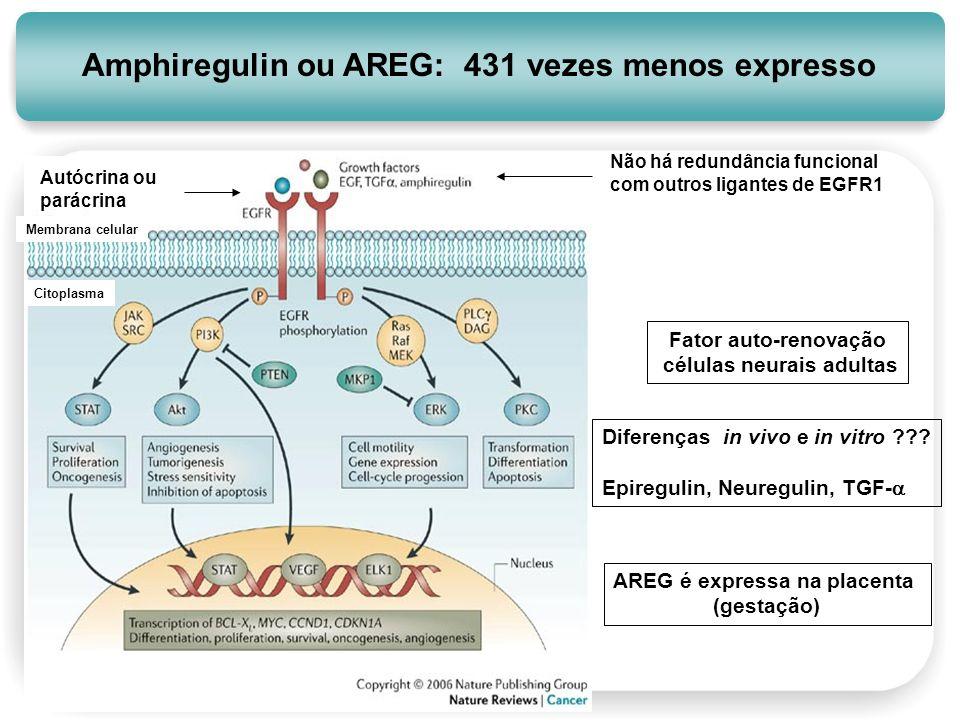 células neurais adultas AREG é expressa na placenta