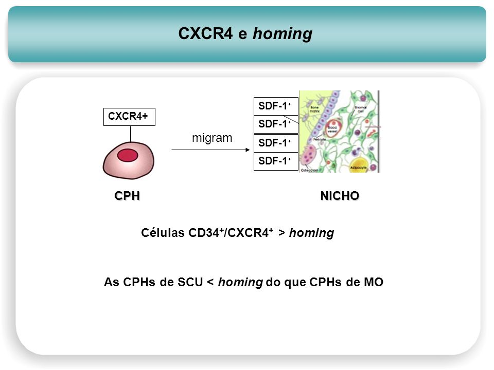 CXCR4 e homing NICHO CPH migram Células CD34+/CXCR4+ > homing