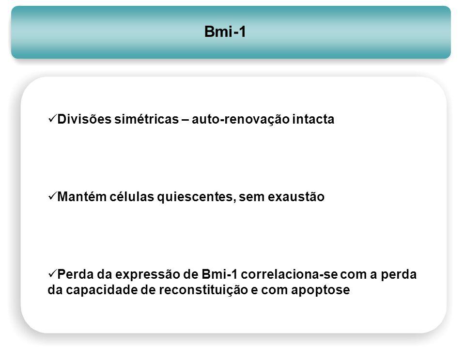 Bmi-1 Divisões simétricas – auto-renovação intacta