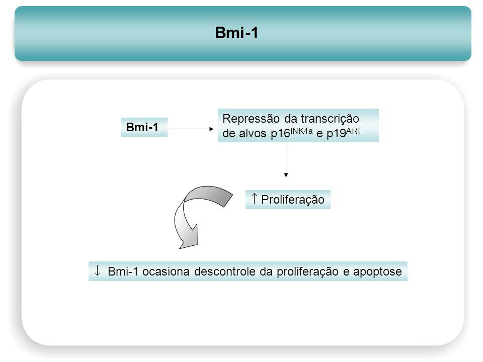 Bmi-1 Repressão da transcrição de alvos p16INK4a e p19ARF Bmi-1