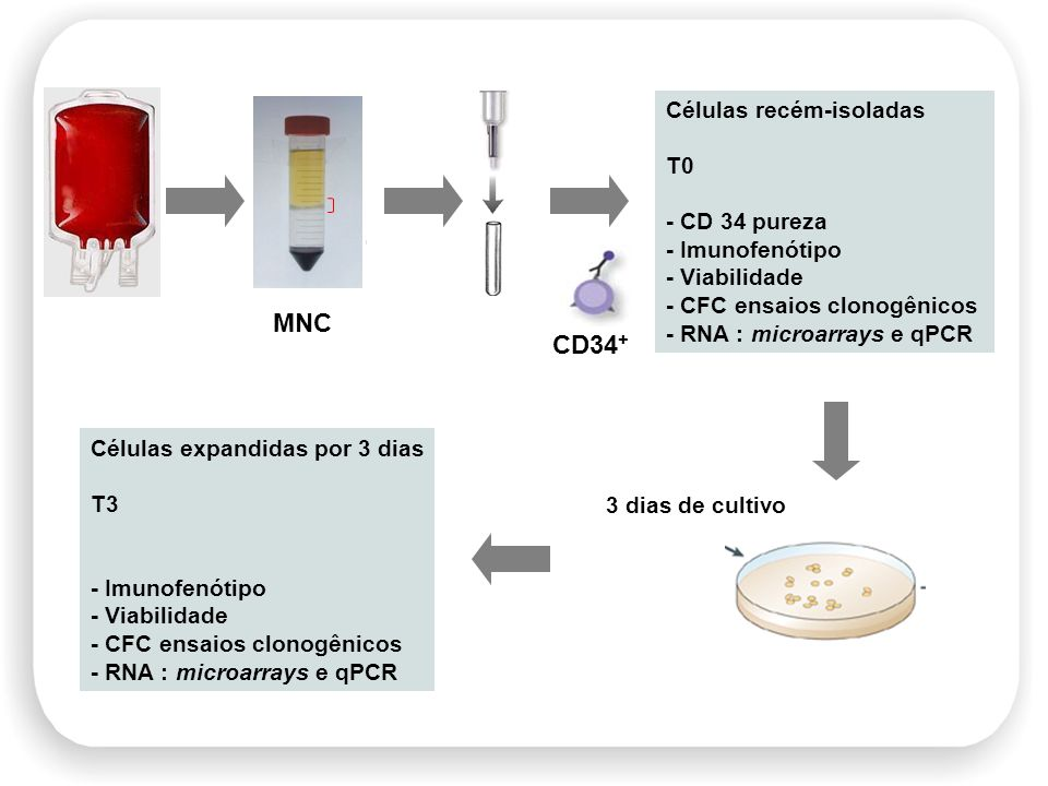 MNC CD34+ Células recém-isoladas T0 - CD 34 pureza - Imunofenótipo