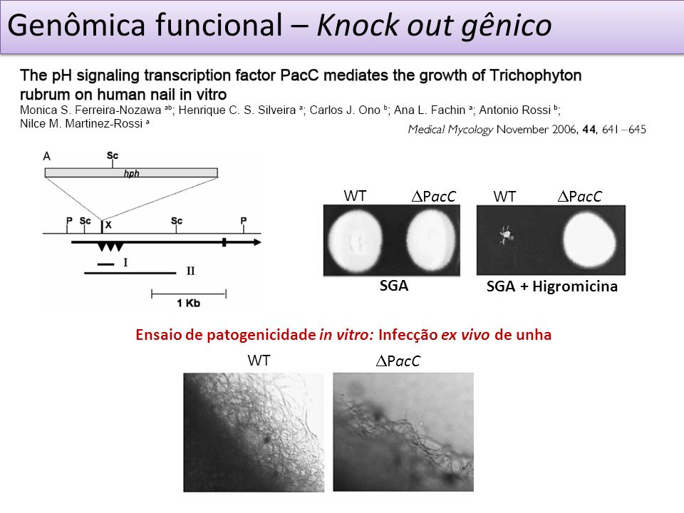 Genômica funcional – Knock out gênico