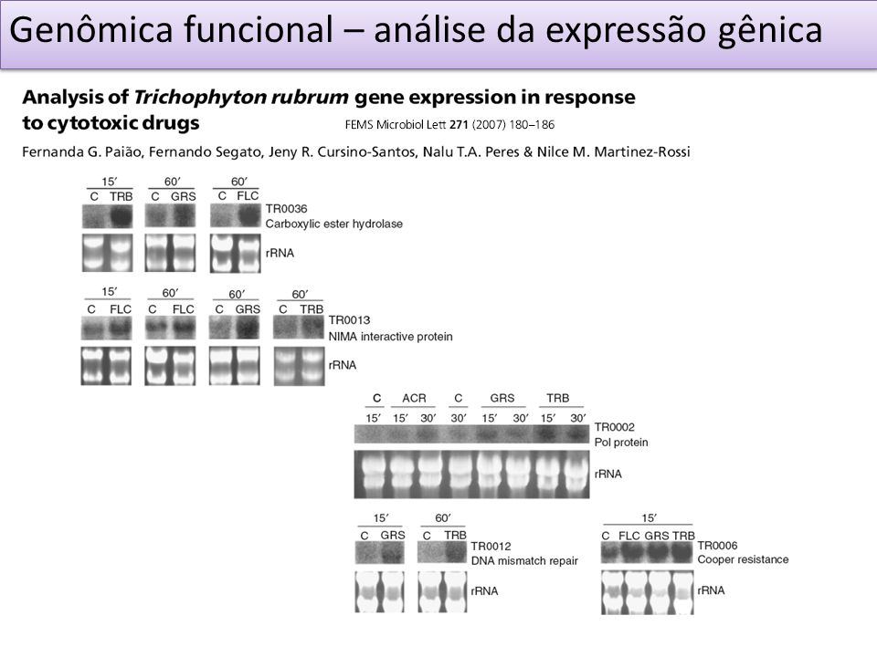 Genômica funcional – análise da expressão gênica