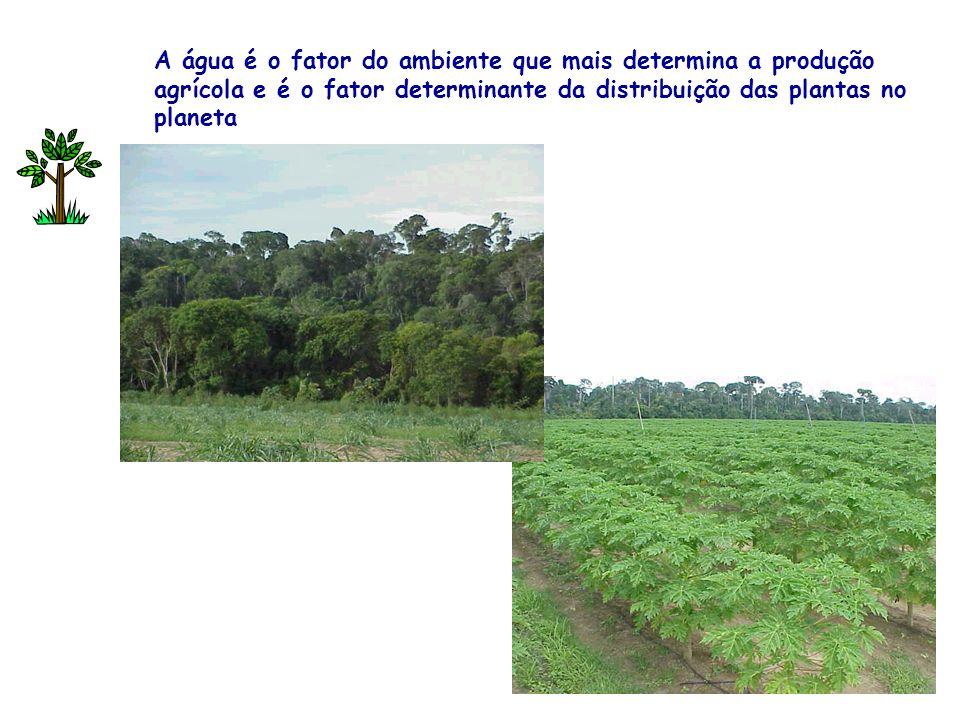 A água é o fator do ambiente que mais determina a produção agrícola e é o fator determinante da distribuição das plantas no planeta