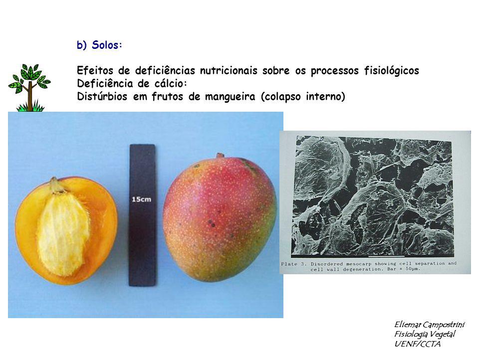 Efeitos de deficiências nutricionais sobre os processos fisiológicos