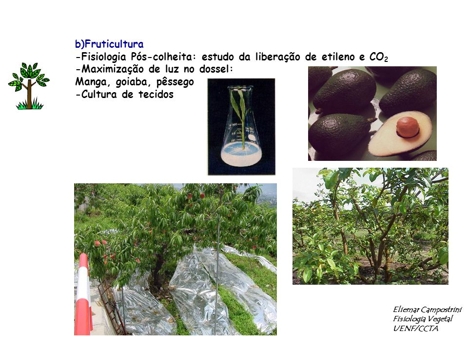 -Fisiologia Pós-colheita: estudo da liberação de etileno e CO2