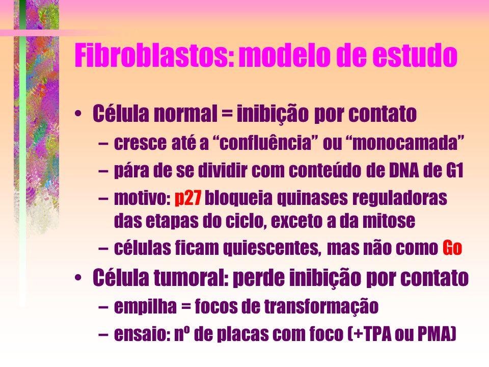 Fibroblastos: modelo de estudo