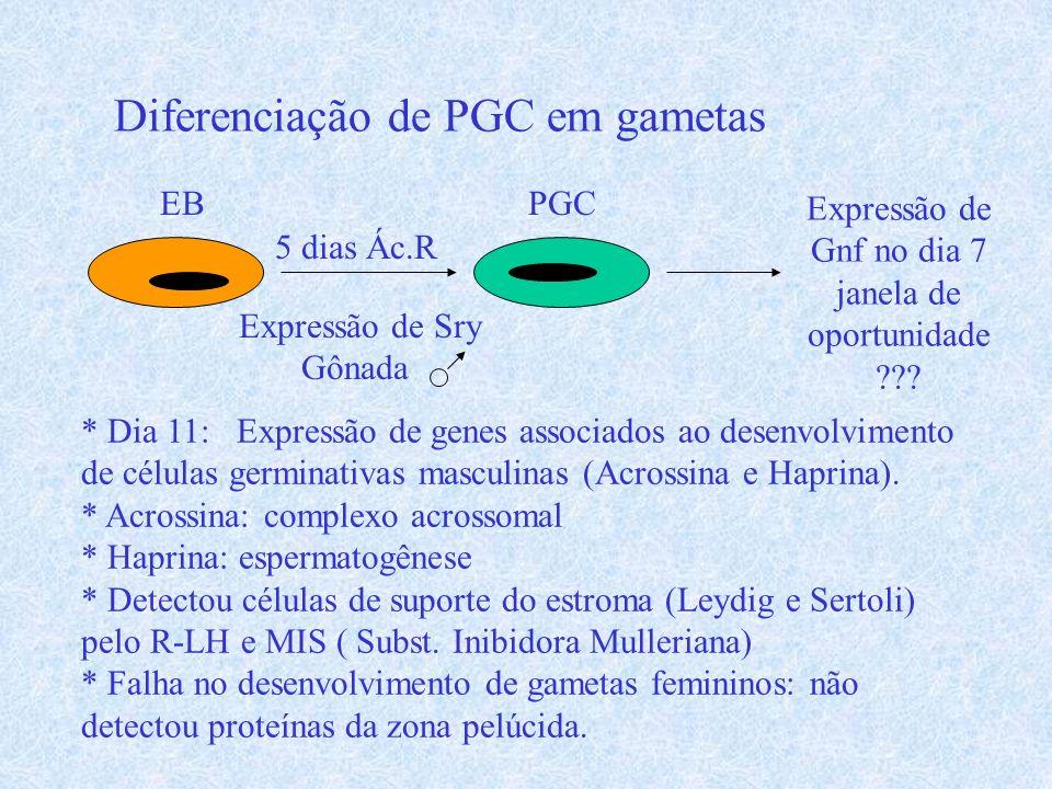 Diferenciação de PGC em gametas