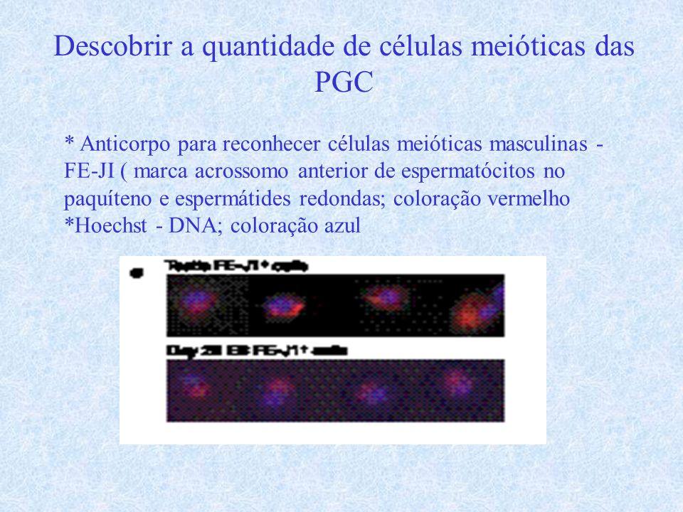 Descobrir a quantidade de células meióticas das PGC