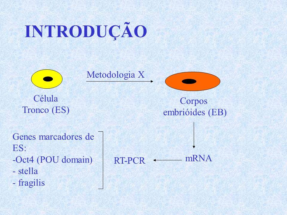 INTRODUÇÃO Metodologia X Célula Corpos Tronco (ES) embrióides (EB)