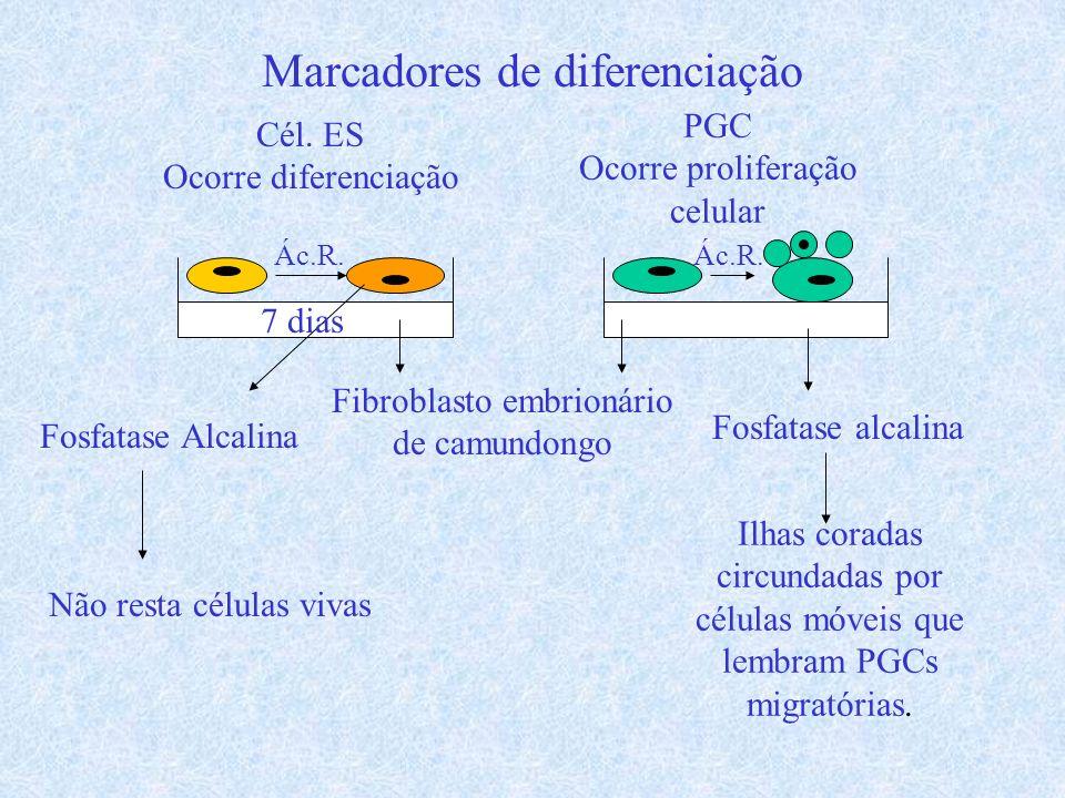 Marcadores de diferenciação