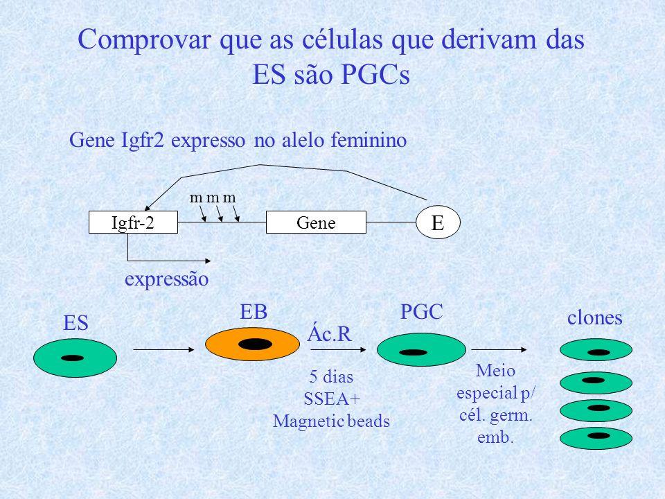 Comprovar que as células que derivam das ES são PGCs