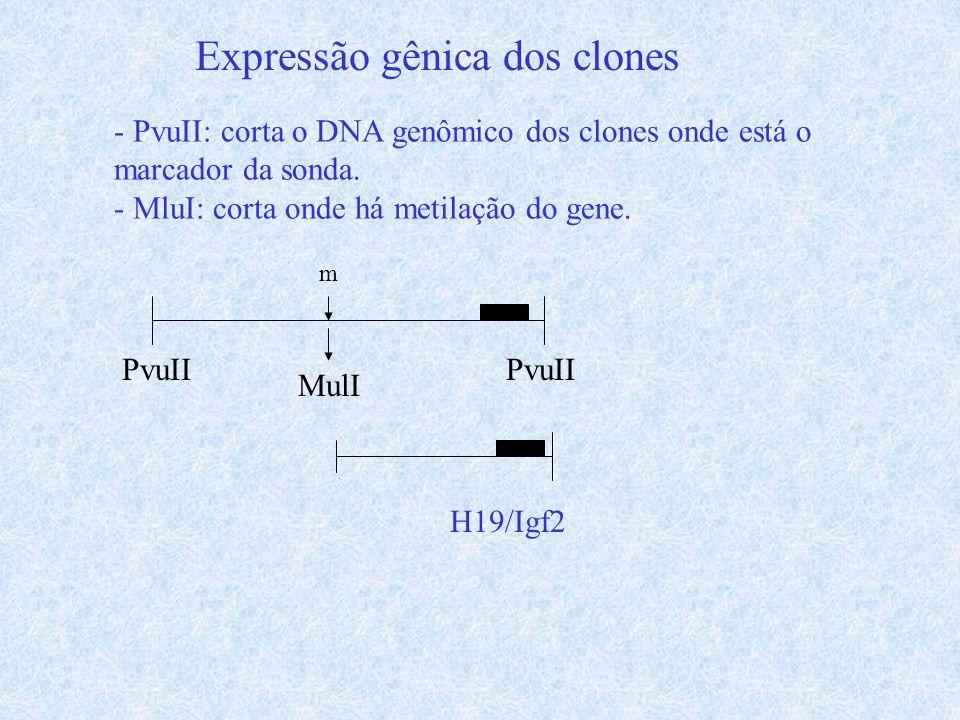 Expressão gênica dos clones