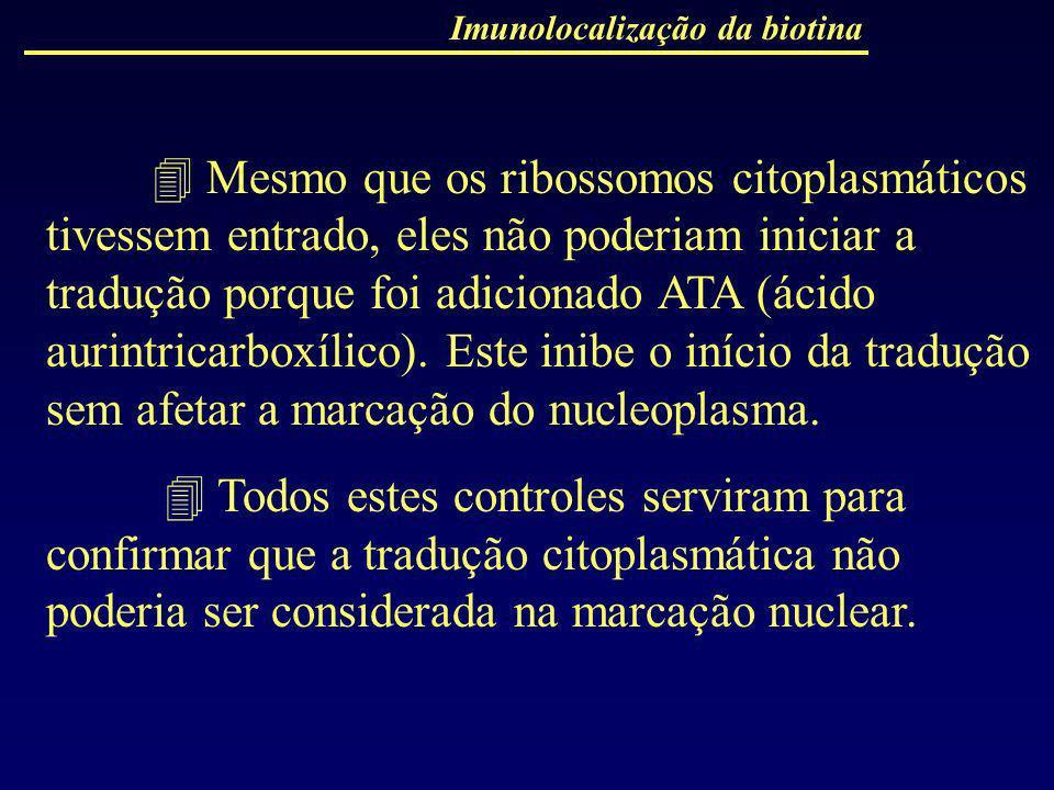 Imunolocalização da biotina