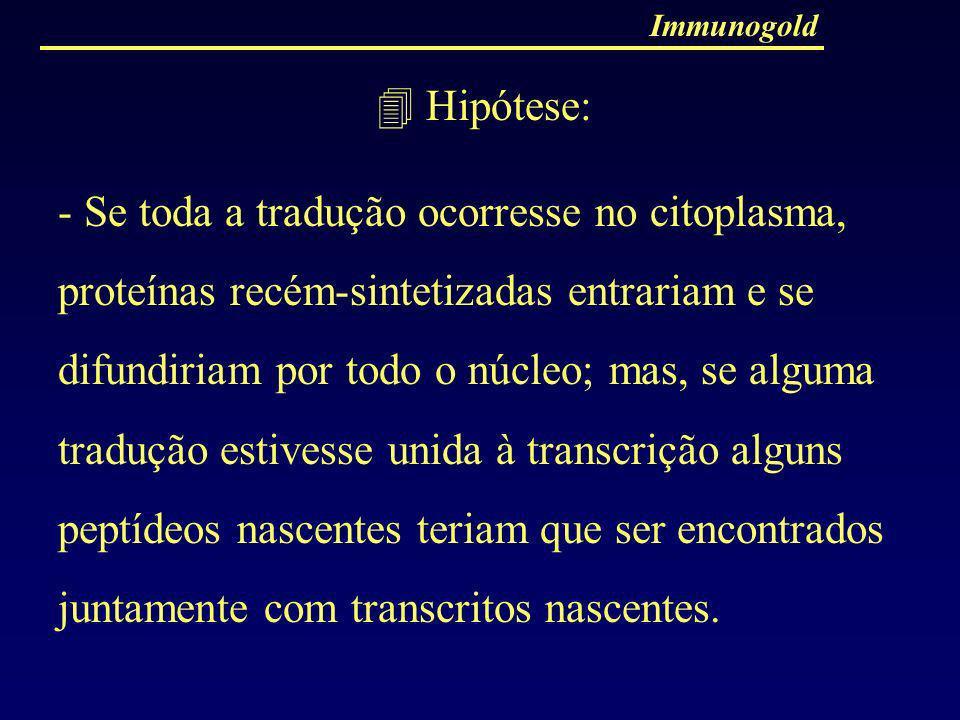Immunogold Hipótese: