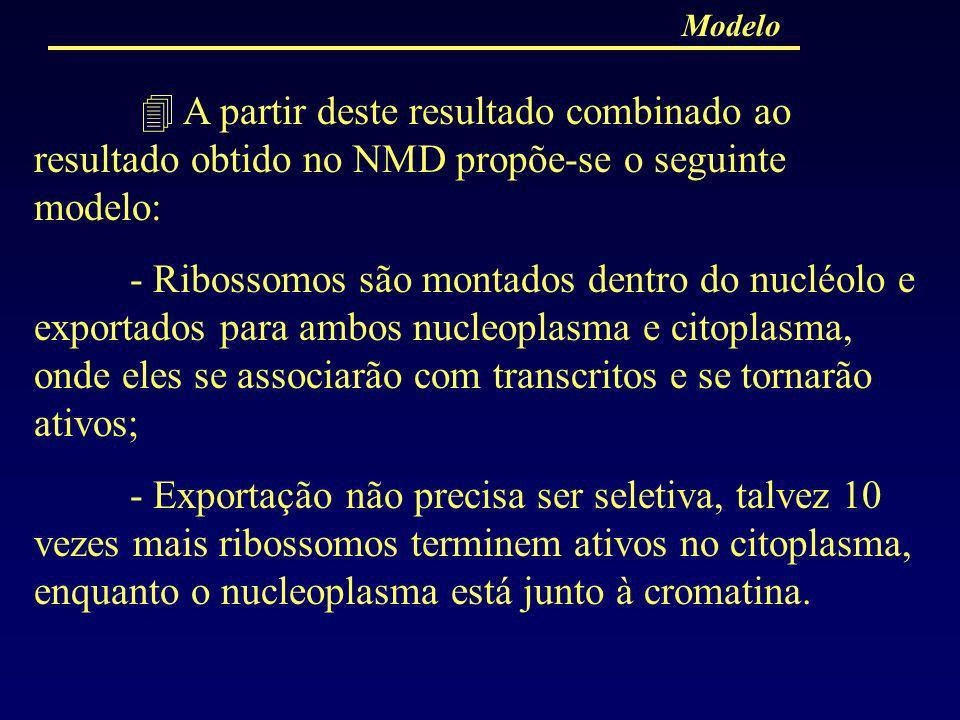 Modelo A partir deste resultado combinado ao resultado obtido no NMD propõe-se o seguinte modelo:
